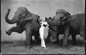 avedon-elephant-picture1